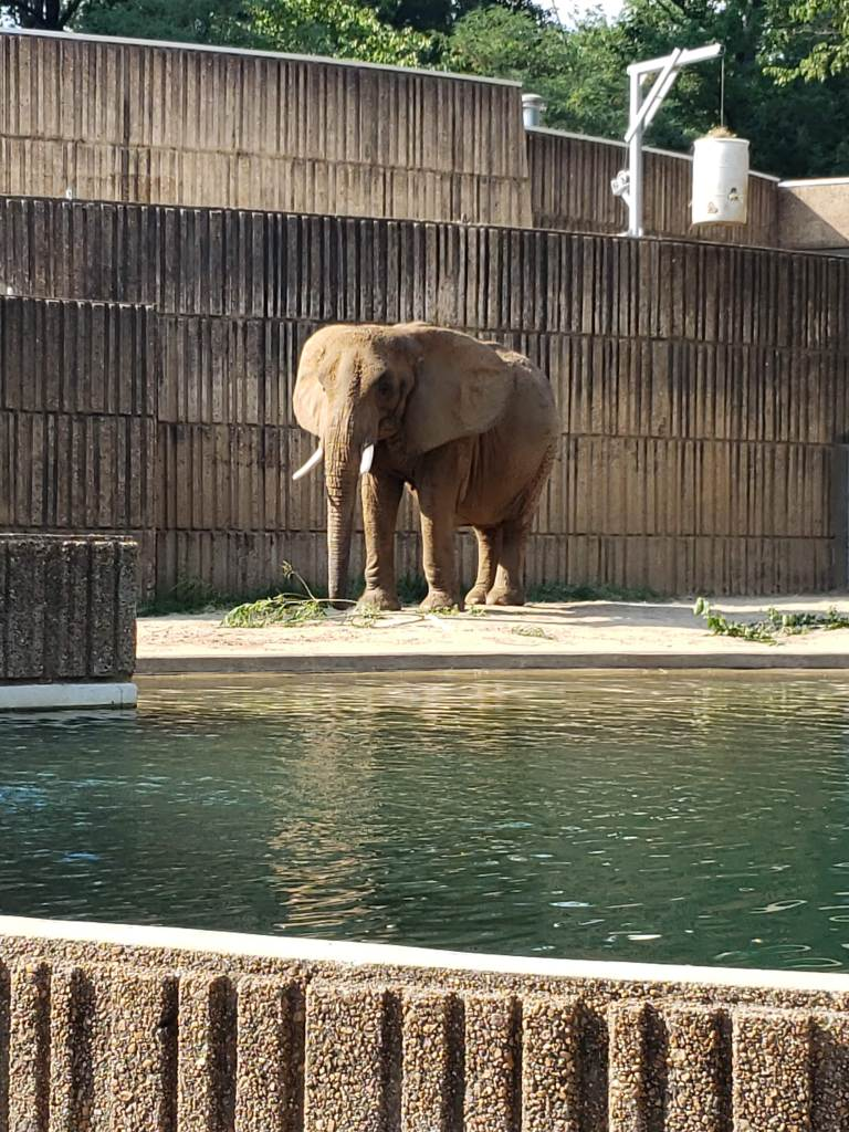 In case you didn't know, elephants are one of my favorite animals. This photo is from when I went to the zoo in Memphis.